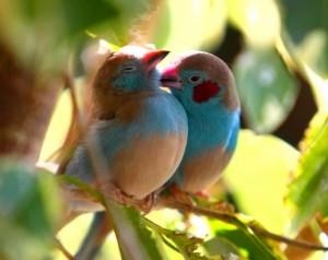 iubire-la-animale-2