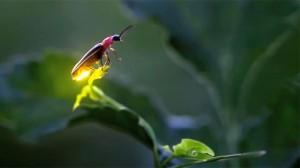 iao_20130810_304_fireflies