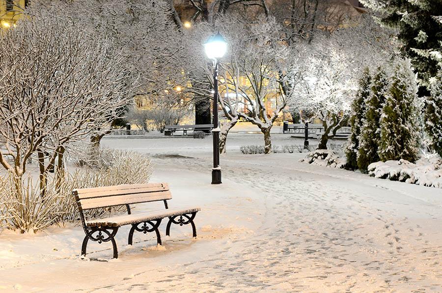 bench-winter-snow-night-lights-light-nature-park-trees