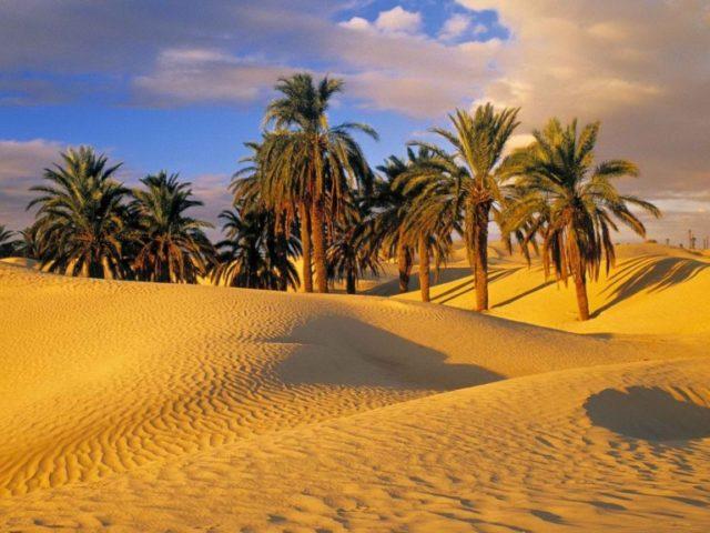 desert-palms