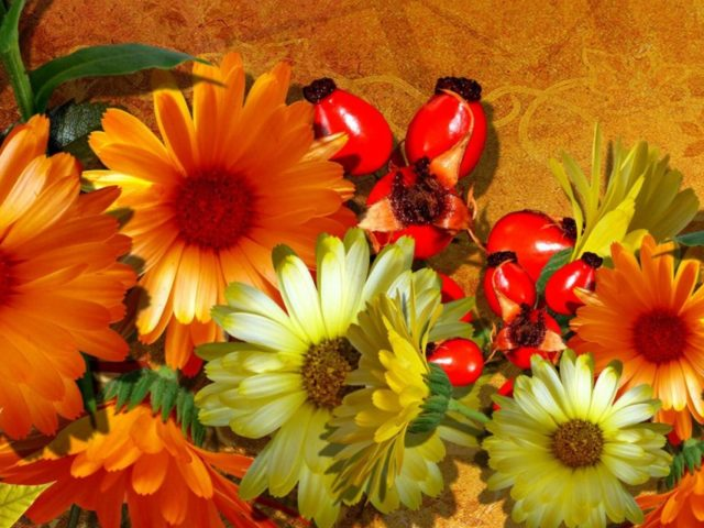 lonely-lovely-flowers-328962