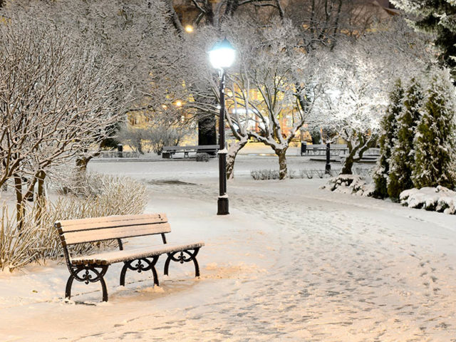 bench-winter-snow-night-lights-light-nature-park-trees