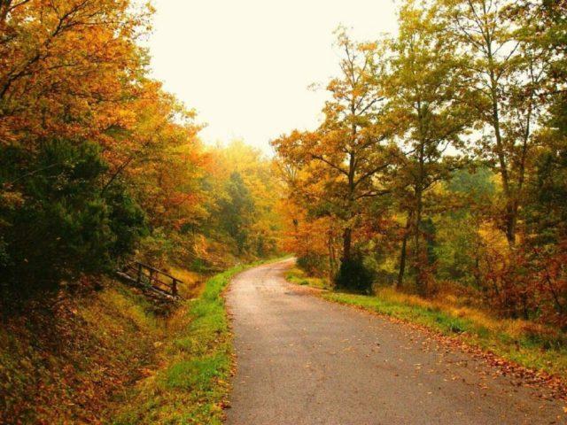 ws_FootPath_Through_Autumn_Forest_1440x900