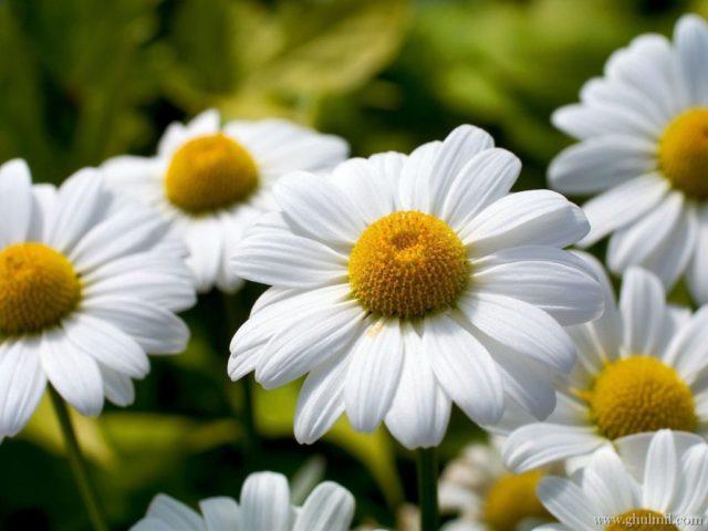 beautiful-friendship-white-yellow-flowers-26