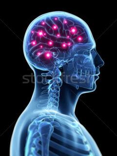 2758248_stock-photo-3d-rendered-illustration---active-brain